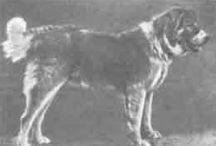 Dog vintage
