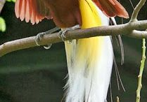 Burung burung