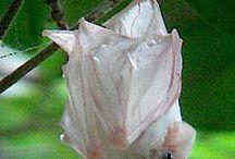 netopýři - neobvyklé zbarvení