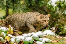 Tiere im Bayerischen Staatswald / Tiere, die im Bayerischen Staatswald leben.