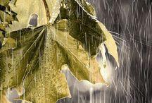❈ Rain ❈ ☔