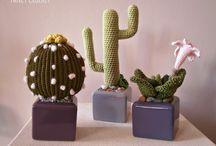 piante grasse uncinettp