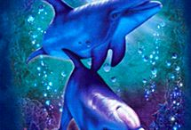 dolphins&orcas