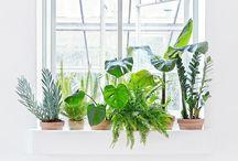 Dwell: Plants Make Me Breathe Easier
