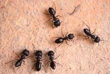 Karıncalardan kurtulma