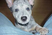 Cute Puppies / by FancydressDog .com