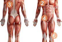 Body knowledge