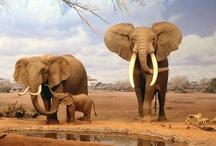 On Safari / by Dodie Dee
