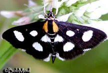 Butterfly & Moth 蝴蝶與蛾 / by Kingman Sheih 薛無