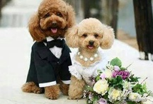 Doggy Wedding