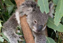 Australia - Travel Destination / Australia travel tips: roadtrips, wildlife spots, national parks and fascinating nature / Australien Reise Tipps rund um Roadtrips, Tiere, Nationalparks und Natur