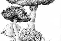 Botanikk 8 trinn