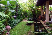 ogród tył