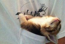 Kitties!!!!!