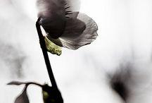 fleur danse temps