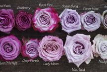 MiaoQun - Lilac Pastels in Summer