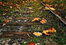 Autumn / Autumn is my favorite time of the year. I love the cool crisp weather that is perfect for wearing sweaters. I love the smell of pumpkin, cinnamon and apples. I love the colors of Autumn and falling leaves. It leaves me breathless!! / by Amy Young