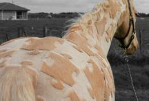 střihy koní