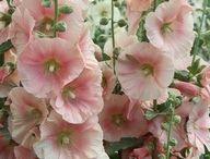 Pretty flowers... / My favourite flowers