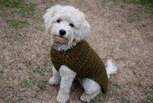 kutya öltözet