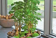 Deko Wohnung Pflanzen