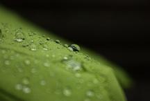 My nature photos