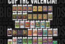 6th THC Cannabis Cup Valencia