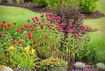 Landscaping Ideas / by Amy Wright