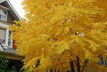 Trees Autumn colour
