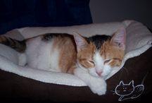 my calico kitten sara / by Jennifer