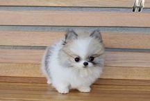 Το αξιολάτρευτο  και μικρουλι σκυλάκι !!!