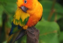 Color Combos - Real Life / by Bobbie Sumpter