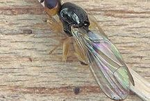 Insects: Garden Pests