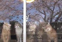 Юмор в котах