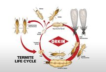 Termitas / Aqui encontrarás información de las distintas plagas de termitas existentes y que te puedes afectar.