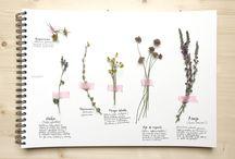Cuaderno de campo/ Field notebook / Bonitos y originales cuadernos llenos de flores y hojas pintadas con acuarela
