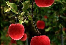 Buah-buahan / Fruits / 果物