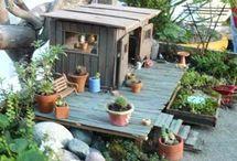 Fairy beach gardens
