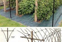ogrod owocowy