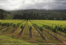 Corder Wines / Corder Family Wines in the Overberg's Elgin Valley are known for their elegance, zesty character, fruit structure and flavour.   http://bit.ly/1BVGDIr