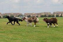 Houston Dog Parks and Dog-Friendly Bars & Restaurants / Houston Dog Parks and Dog-Friendly Bars & Restaurants