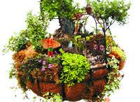 Fairy Gardens / by Mary Ainsworth