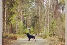 Portugalwaterdog Donna / Pennydale Capricorn, Donna