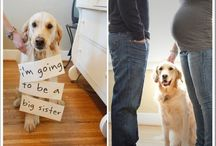 Cute Maternity Pictures / by Stacy Graves