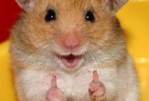 Hamsters are so cute