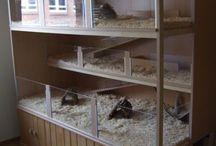 Hamster World :D