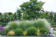 Rabata brzozowo-trawiasta