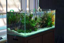 Good Looking Aquarium / Nothing beats a good looking Aquarium! Check out the benefits to #rent an #aquarium - http://rentaquarium.co.uk/blog/benefits-of-rent-aquarium/