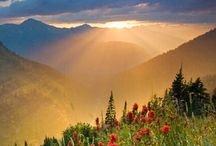 The Valley of Flowers / The Valley of Flowers, Uttarakhand is as spectacular as it can get! Make a trek to this beautiful place in the months of June-September and be awed by the beauty it has to offer!   Its known for its meadows of alpine flowers and variety of over 500 species of flora.