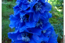 Flowers / by Mardi Manning
